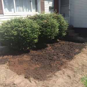 Asparagus Garden Dug and Planted