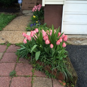 Bulbs in Front