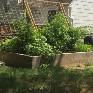 garden report 06-01